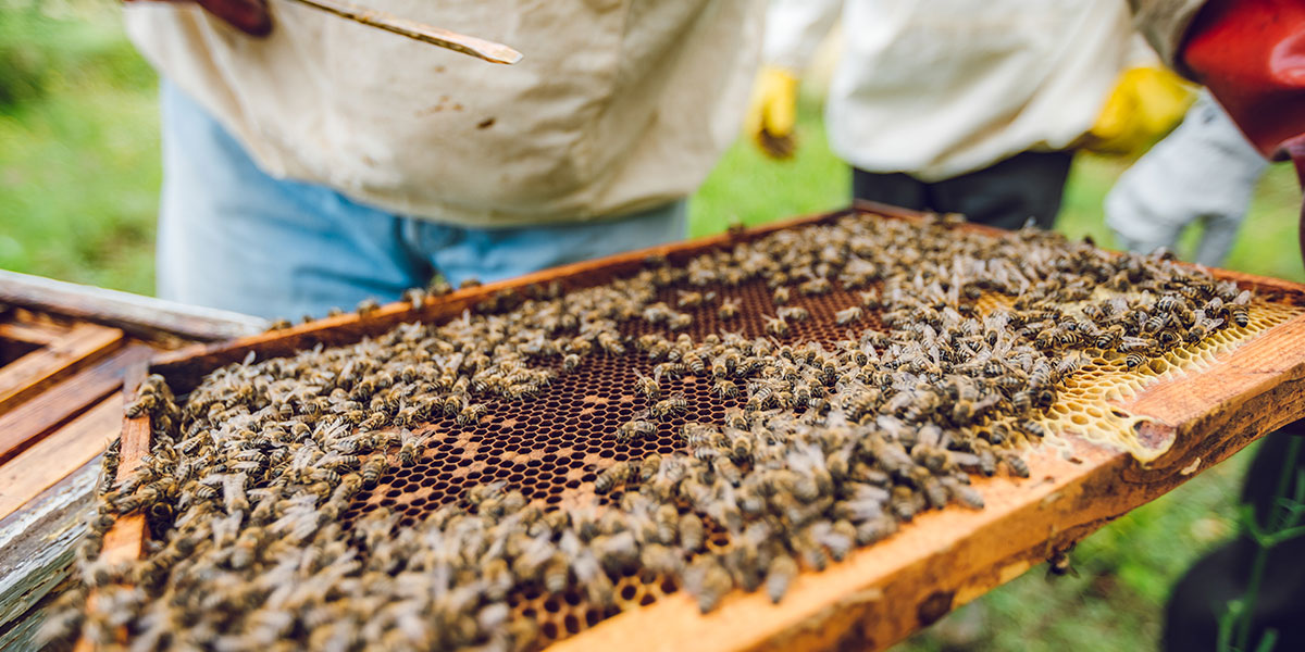 The Process and Costs of Beekeeping