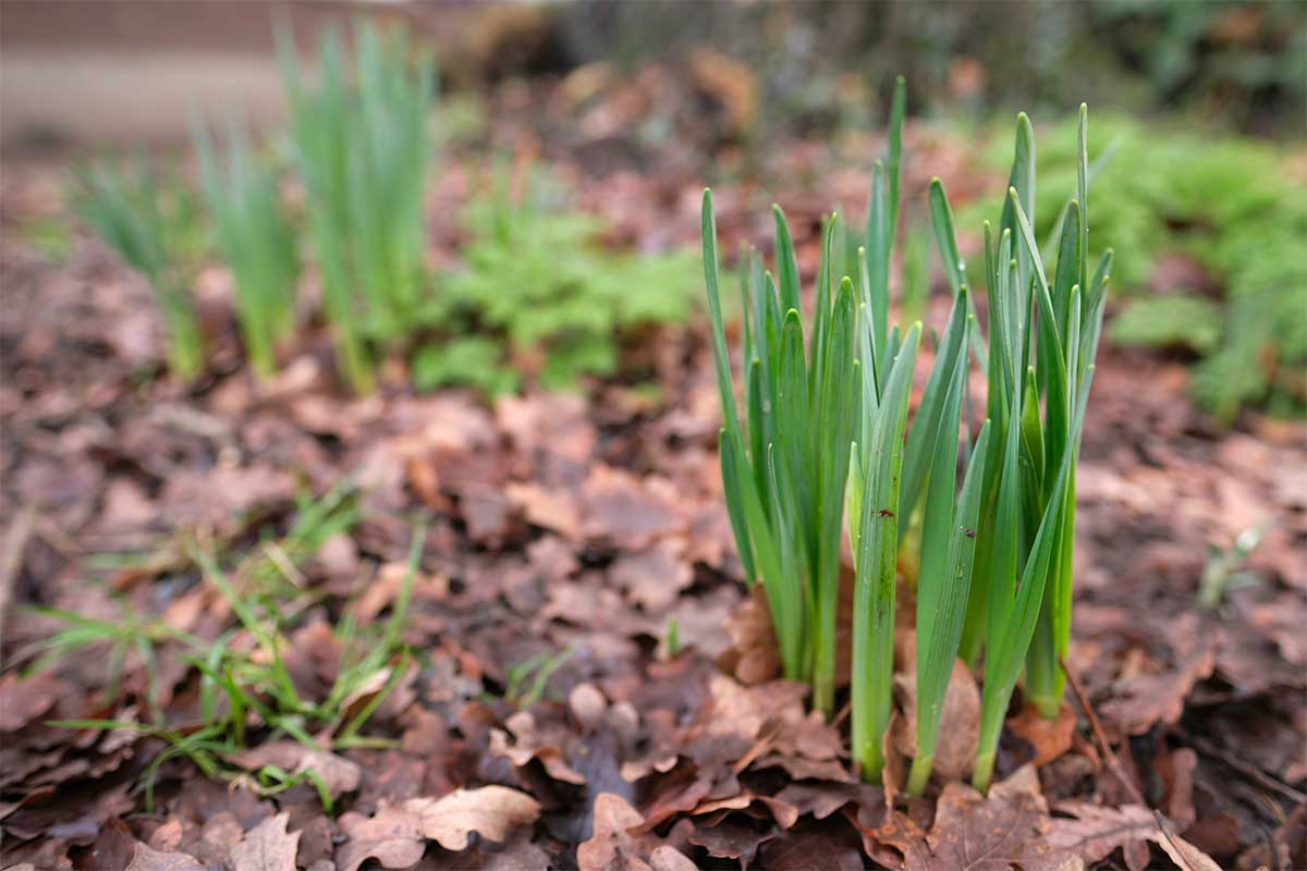 4 Ways to Get Your Garden Ready For Spring